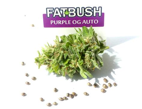 Cannabiszaden