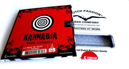 Gefeminiseerde Cannabis zaden