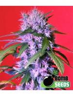 Berry Bomb van Bomb Seeds