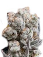 cannabiszaden kopen